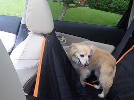 Funda de asiento para perros, ideal todos los autos y SUVs
