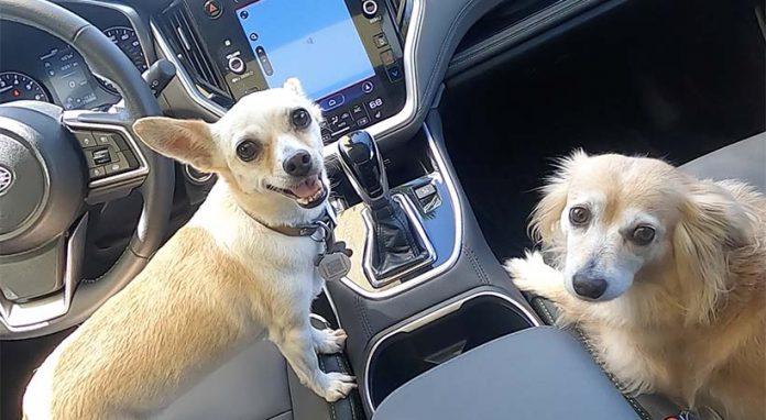 Subaru Outback ONYX Edition 2020 a prueba con 6 perros